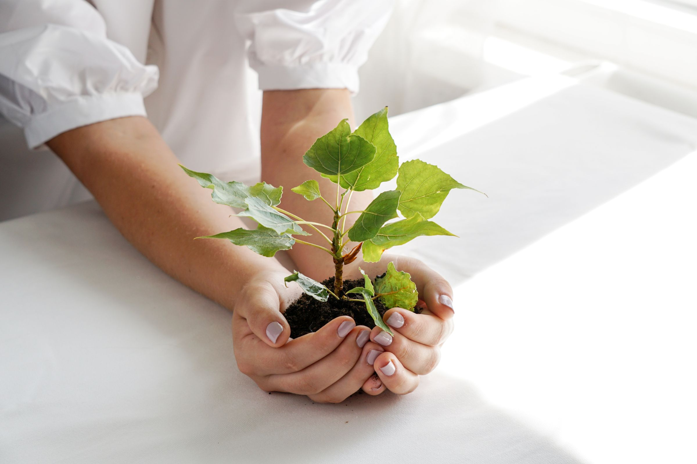 Woman Holding Green Plant Palm Her Hand Close Up Hand Holding Young Fresh Sprout Shallow Depth Field With Focus Seedling